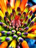 五颜六色的仙人掌花 免版税图库摄影