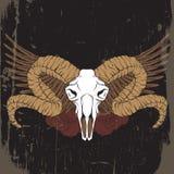 五颜六色的传染媒介手拉的例证 与公羊的头骨的艺术品 库存例证
