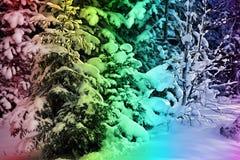 五颜六色的假日多雪的森林 图库摄影