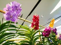 五颜六色的兰花在模范曼谷兰花天堂2014年 免版税库存图片