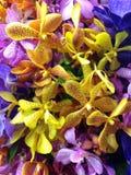 五颜六色的兰花 免版税库存照片