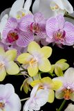 五颜六色的兰花 图库摄影