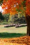 五颜六色的农厂结构树 免版税图库摄影