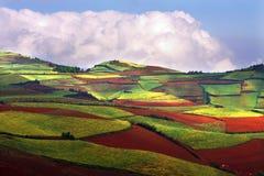 五颜六色的农场 图库摄影