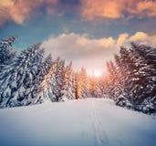 五颜六色的冬天日落在山森林里 库存图片