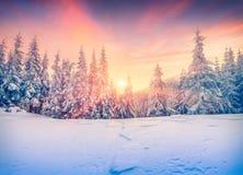 五颜六色的冬天日落在山森林里 免版税库存图片