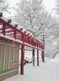 五颜六色的冬天 免版税库存图片