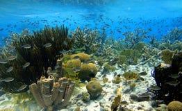 五颜六色的加勒比礁石 免版税库存照片