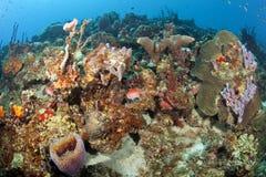 五颜六色的加勒比礁石 库存图片
