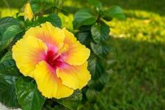 五颜六色的加勒比花 库存图片
