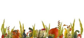五颜六色的南瓜和叶子秋天背景 免版税库存照片