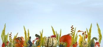 五颜六色的南瓜和叶子秋天背景 库存图片