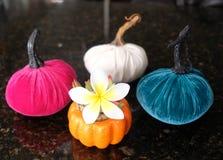 五颜六色的南瓜和羽毛,秋天场面 免版税库存照片