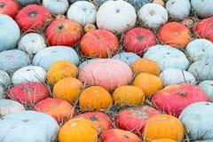 五颜六色的南瓜最大的矮小的红色橙色绿色许多果子背景样式秋天 免版税库存图片