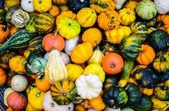 五颜六色的南瓜背景 免版税库存照片