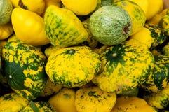 五颜六色的南瓜 免版税图库摄影