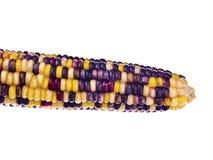 五颜六色的印第安玉米 免版税库存图片