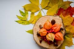 五颜六色的叶子、橡子和一个分支用野生玫瑰色莓果在白色桌上,顶视图秋天静物画  复制空间 图库摄影