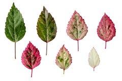 五颜六色的叶子。 免版税库存图片