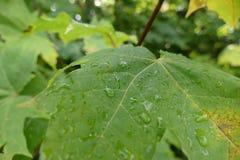 五颜六色的叶子在与露滴的秋天 免版税库存照片
