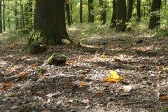 五颜六色的叶子在与露滴的秋天 库存照片