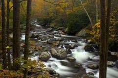 五颜六色的叶子在大烟山, TN,美国 免版税库存图片