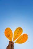 五颜六色的叶子在手中 库存照片