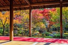 五颜六色的叶子在秋天公园,日本 免版税库存图片
