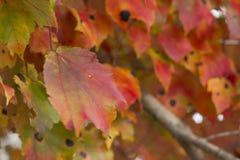 五颜六色的叶子在秋天blurr背景中 免版税库存图片