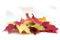 五颜六色的叶子堆 库存照片