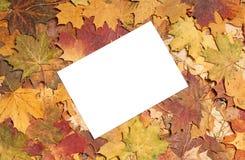五颜六色的叶子季节性秋天背景  免版税库存照片