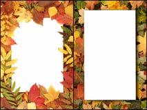 五颜六色的叶子季节性秋天背景  免版税图库摄影