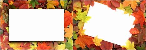 五颜六色的叶子季节性秋天背景  库存照片