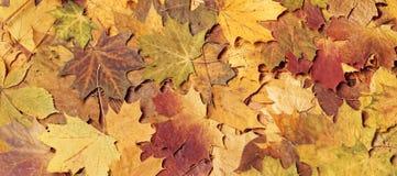 五颜六色的叶子季节性秋天背景  免版税库存图片
