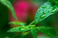 五颜六色的叶子抽象秋天视图有雨小滴的 免版税库存图片