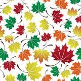 五颜六色的叶子无缝的样式eps10 免版税库存图片