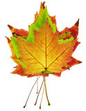 五颜六色的叶子槭树栈 库存照片