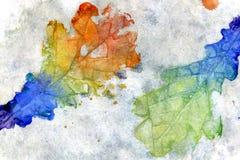 五颜六色的叶子橡木 库存图片