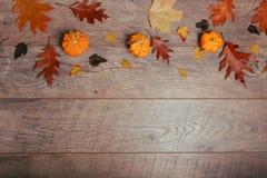 五颜六色的叶子的秋天安排,橡子,在木背景的栗子果子与文本的自由空间 顶视图 库存照片