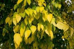 五颜六色的叶子纹理在秋天 库存照片