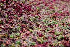 五颜六色的叶子背景 库存图片