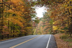 五颜六色的叶子路 免版税图库摄影