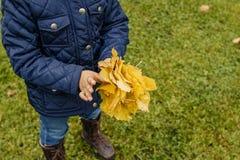 五颜六色的叶子,举行黄色的女孩在草坪离开 秋天时尚,蓝色外套 怀乡秋天葡萄酒概念,焦点在 图库摄影