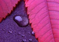 五颜六色的叶子 免版税库存照片