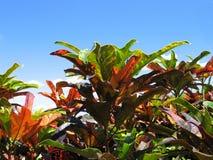 五颜六色的叶子 库存图片