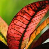 五颜六色的叶子 图库摄影