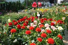 五颜六色的园艺中心 库存照片
