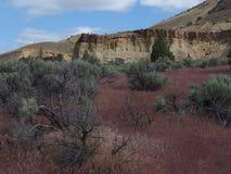 五颜六色的土坎在春天 图库摄影
