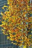 五颜六色的在秋天的树现代大厦 库存照片