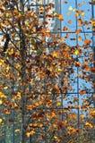五颜六色的在秋天的树现代大厦 免版税库存图片
